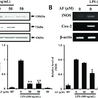 Effects of AF on the levels of LPS-induced cytokines TNF-α