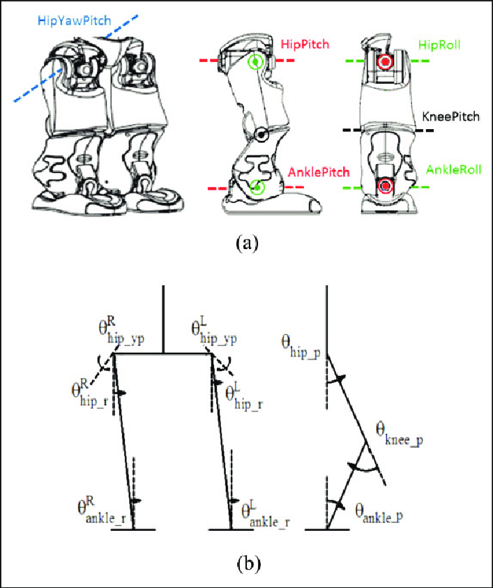 Biped robot model. (a) The lower limb joints of a biped