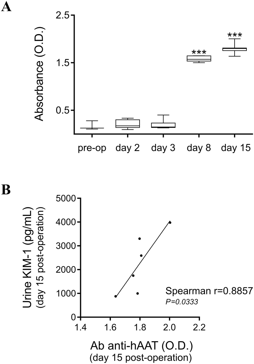 hight resolution of mouse anti haat antibody formation and its correlation with urine levels of kim 1