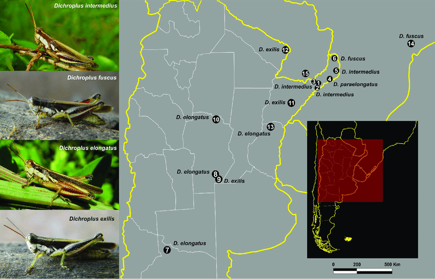 grasshopper insect diagram 7 pin relay geographic localities of dichroplus species sampled in this download scientific