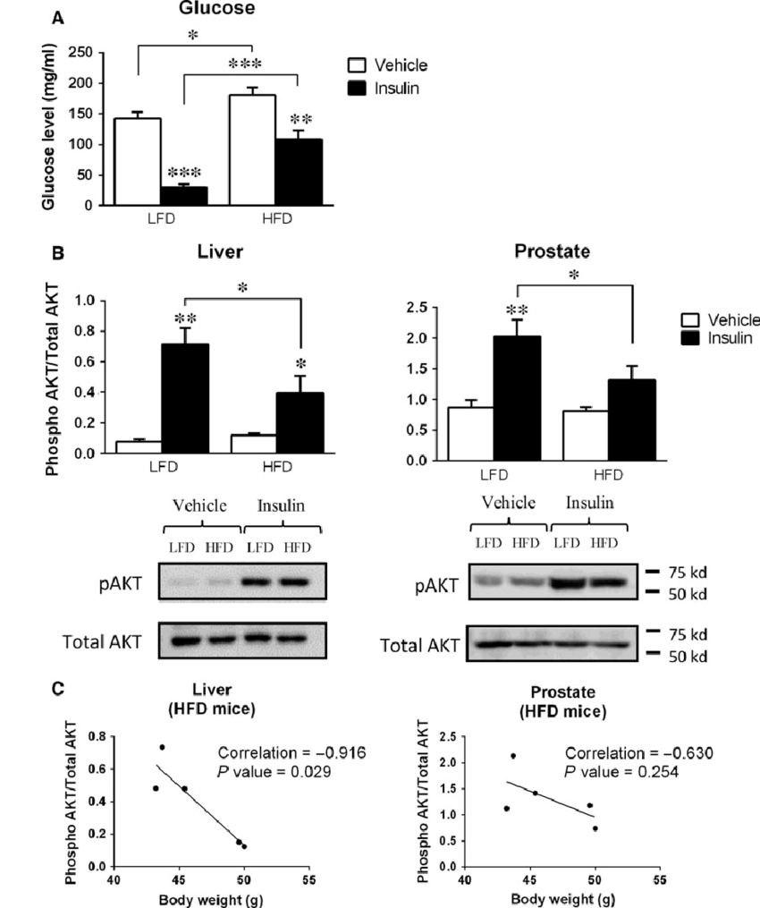 Effect of acute insulin injection on insulin signalling ...