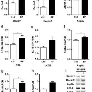 (PDF) Activation of autophagy at cerebral cortex and