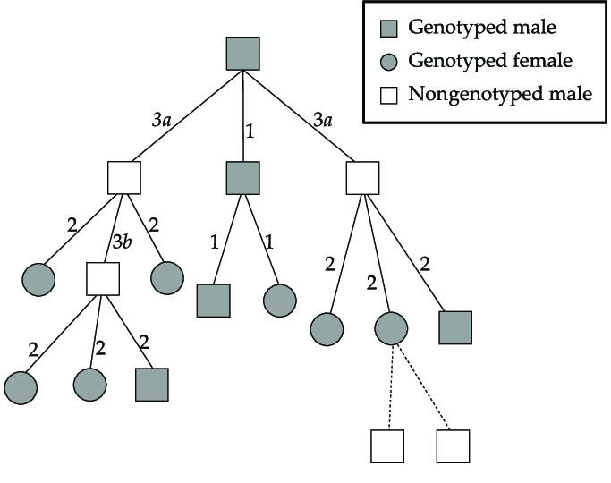 Example part pedigree with only paternal links shown