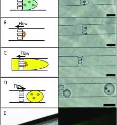 bead separation schematic images and validation of droplet extraction a b schematic [ 850 x 1257 Pixel ]