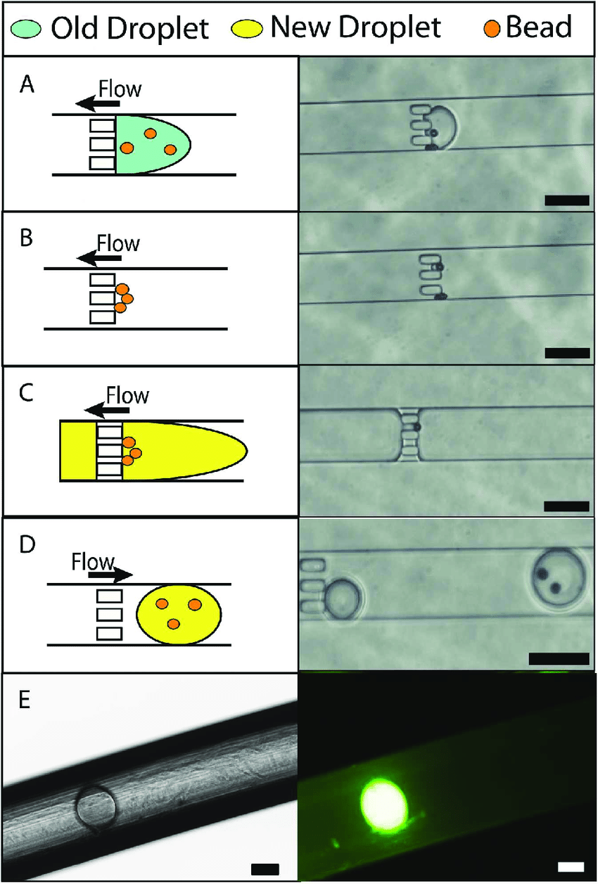 hight resolution of bead separation schematic images and validation of droplet extraction a b schematic
