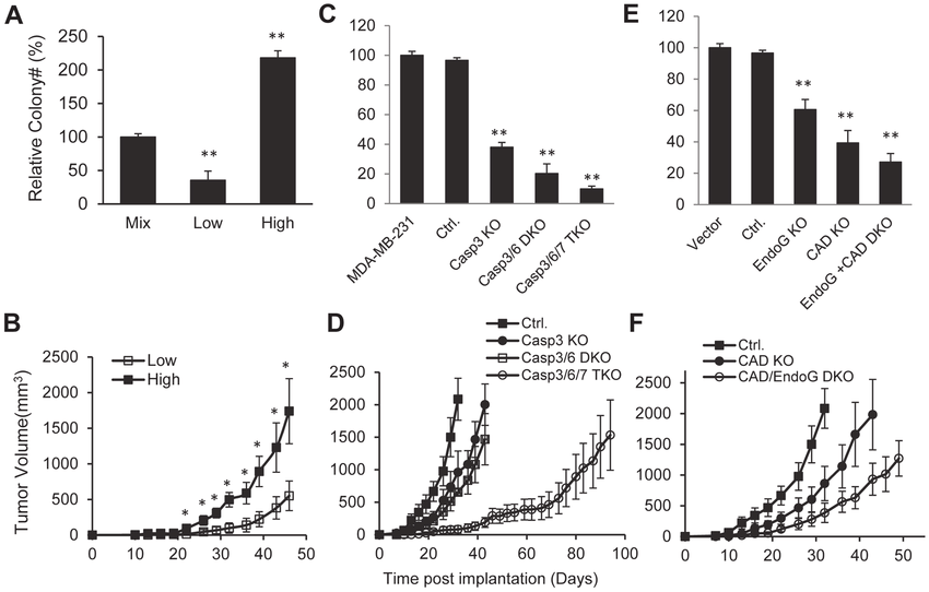 Effects of spDSBs on the tumorigenic abilities of cancer