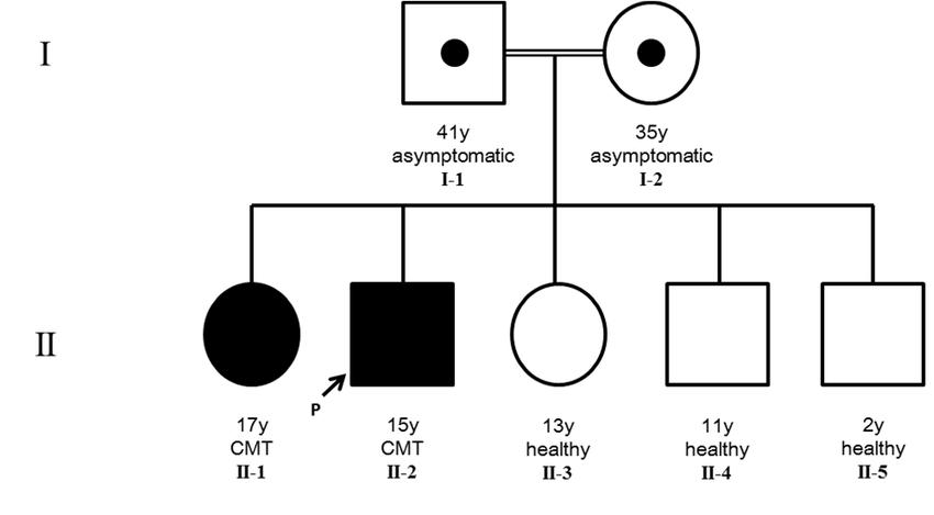(a) Pedigree showing the autosomal recessive inheritance