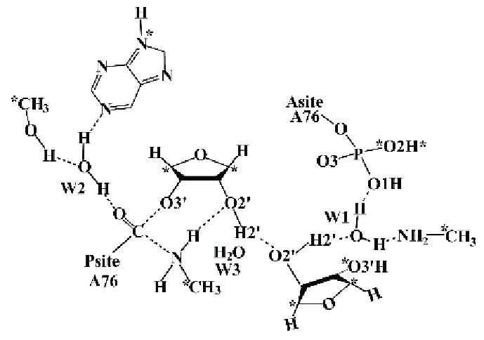 Scheme 2. Schematic representation of the Quantum