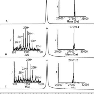 (PDF) Total chemical synthesis of SUMO-2-Lys63-linked