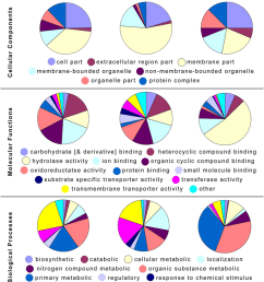 pie charts of level 3 go term categories for the differentially and highly expressed genes of [ 850 x 969 Pixel ]