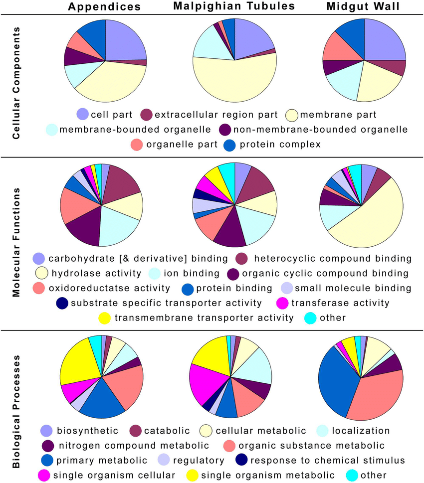 hight resolution of pie charts of level 3 go term categories for the differentially and highly expressed genes of