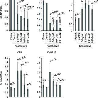 UV-DDB regulates p53 activity through degradation of CABIN1. (A) HCT116...   Download Scientific Diagram