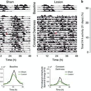 (PDF) The histamine H3 receptor antagonist thioperamide