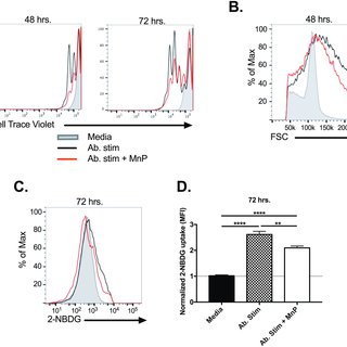 Mechanism for the effect of ROS inhibition on CD4 + T