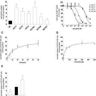 (PDF) Importance of the novel organic cation transporter 1