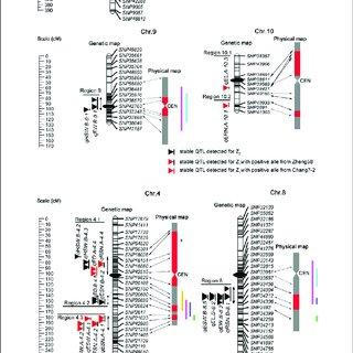 (PDF) Identification of Heterosis-Associated Stable QTLs