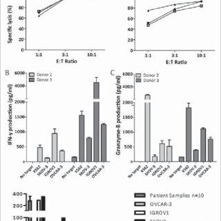 (PDF) Umbilical cord blood CD34 + progenitor-derived NK