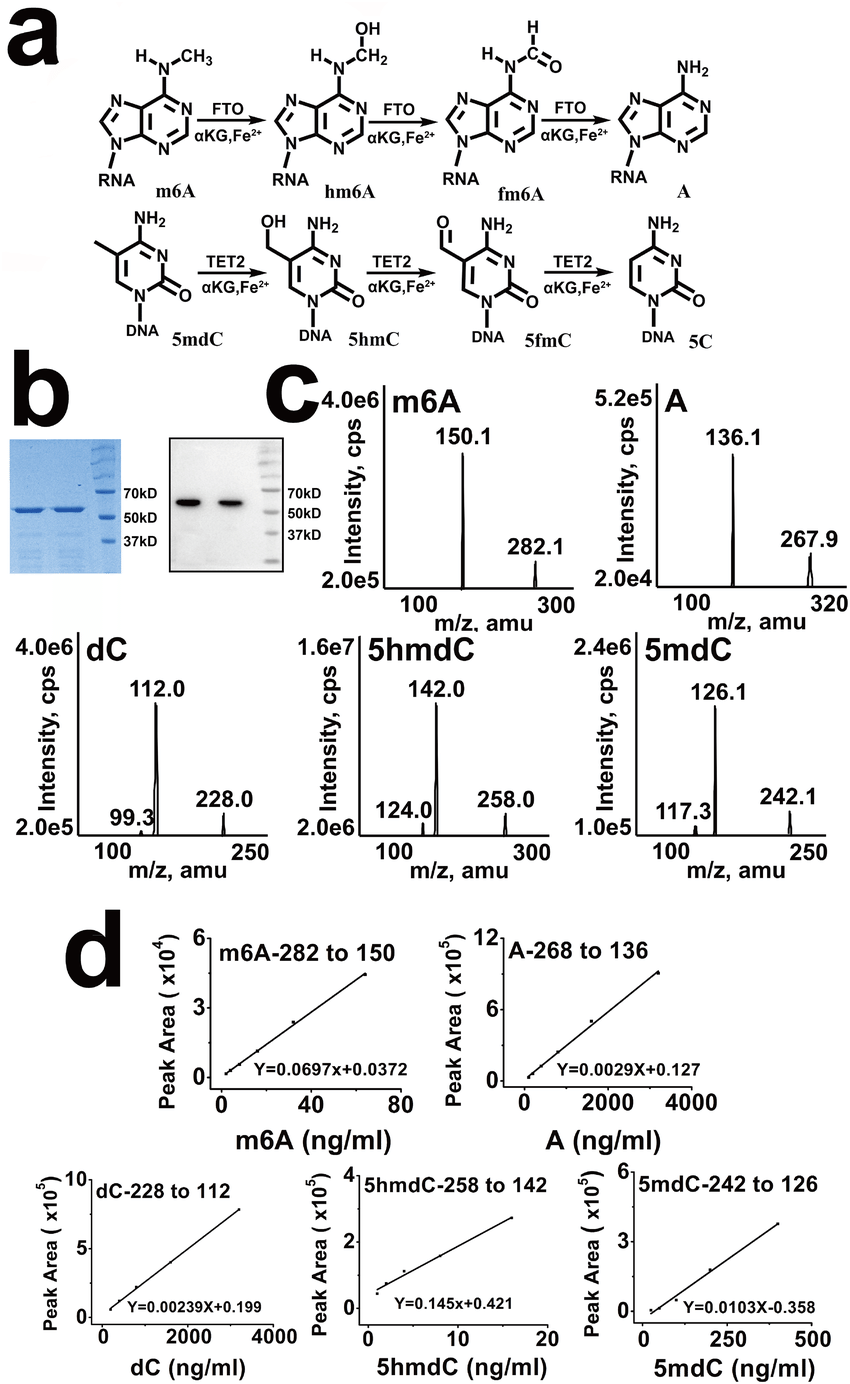 hight resolution of characterization of several kinds of nucleoside modification in dna and download scientific diagram