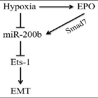 Scheme 2. Possible epithelial to mesenchymal transition