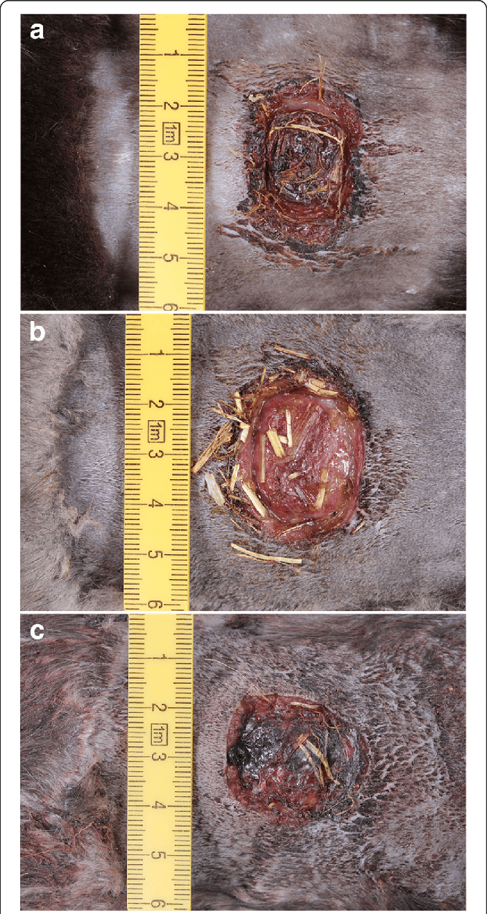 medium resolution of the wounds show varying degree of scab formation