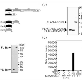 (PDF) Poly (I:C) and hyaluronic acid directly interact