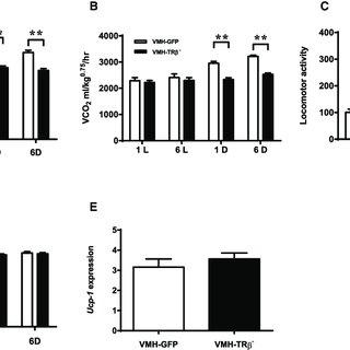 (PDF) Thyroid Hormone Receptor Beta in the Ventromedial