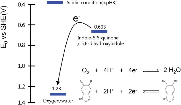Schematic reduction potential diagram of indole-5,6