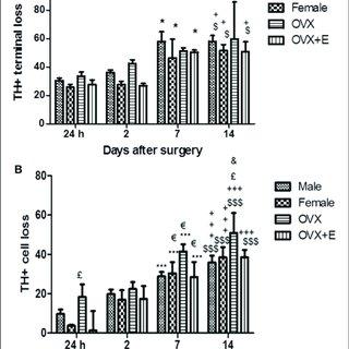 (PDF) Influence of Estrogen Modulation on Glia Activation