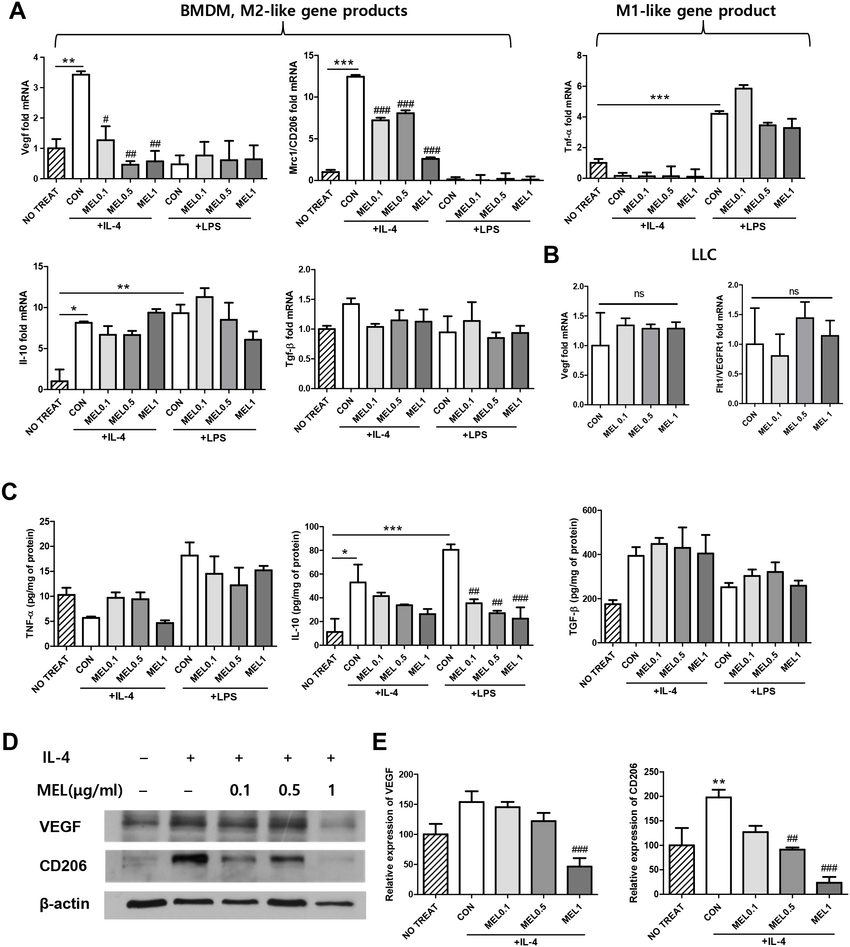 Regulation of CD206 and VEGF expression by melittin in M2