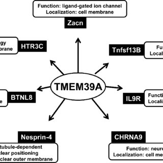 Regulation of HIF-α subunits. (A) Hypoxia-inducible