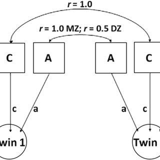 ACE model Univariate ACE model, A: additive genetic