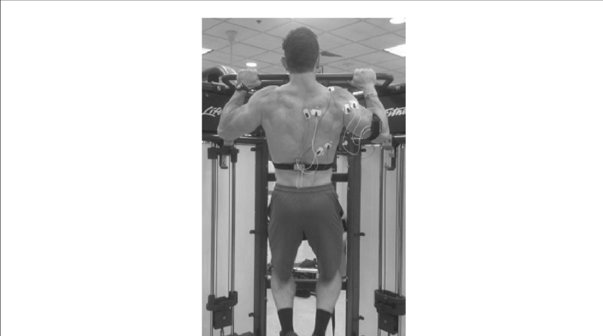 pull up muscles worked diagram auto wiring system pu download scientific