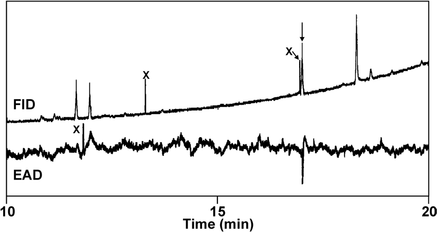 Analysis by coupled gas chromatography-electroantennogram