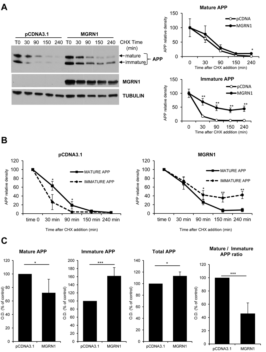 MGRN1 inhibits APP maturation in transfected HEK293 cells