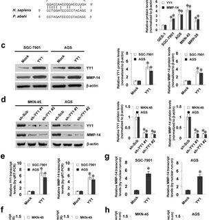 (PDF) MiRNA-584-3p inhibits gastric cancer progression by
