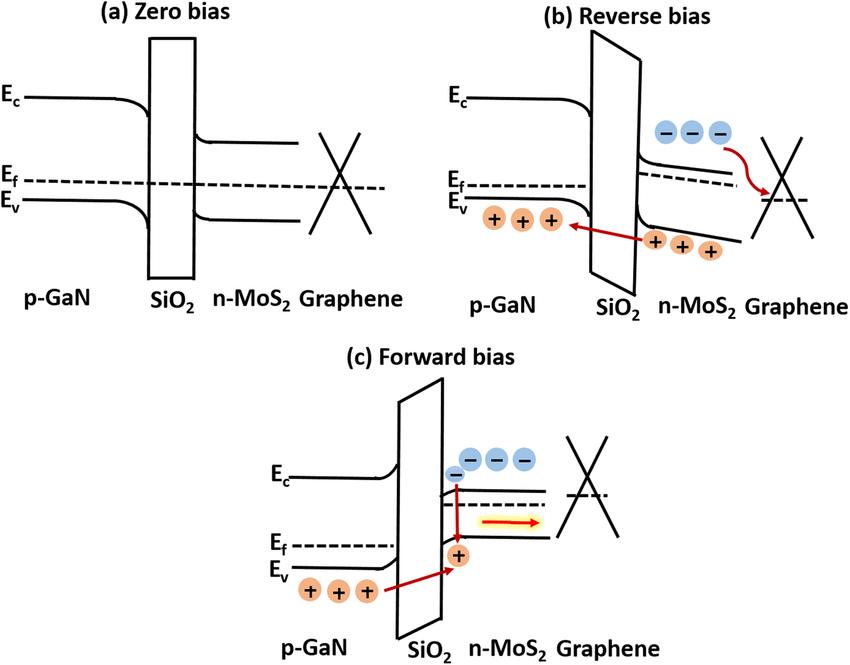 Energy band diagram of p-GaN/SiO 2 /n-MoS 2 /graphene