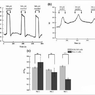 The effect of tunicamycin on the migration of Panc-1 cells