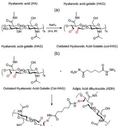 synthesis of oxidized hyaluronic acid ha gelatin hydrogels a download scientific diagram [ 850 x 1355 Pixel ]