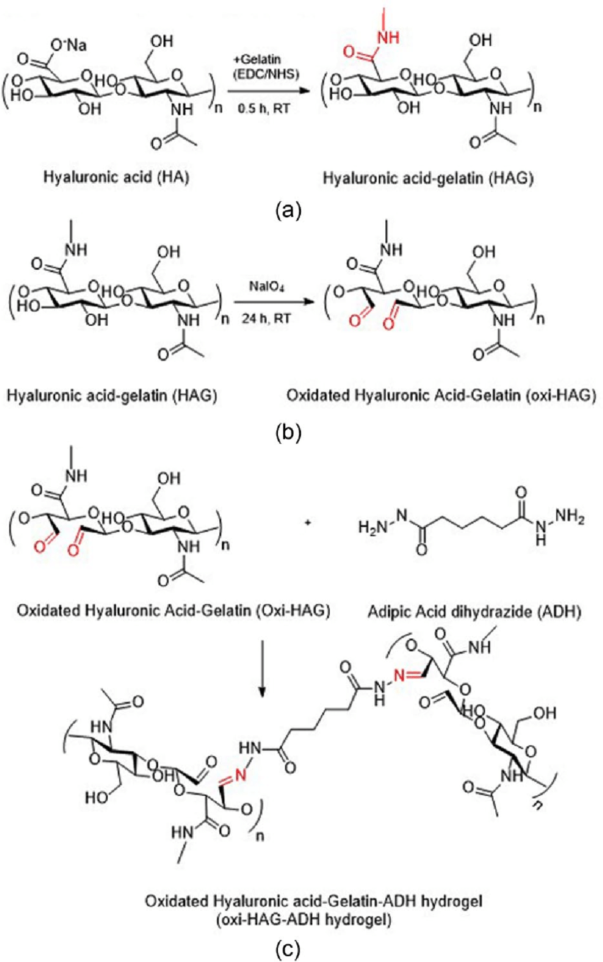 medium resolution of synthesis of oxidized hyaluronic acid ha gelatin hydrogels a download scientific diagram