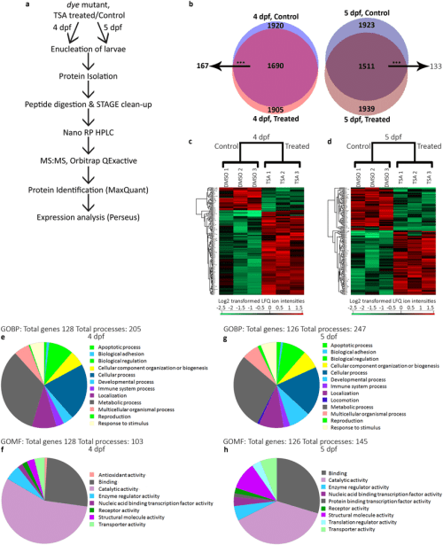 small resolution of identification of differentially expressed proteins in the eye following tsa treatment in dye mutants