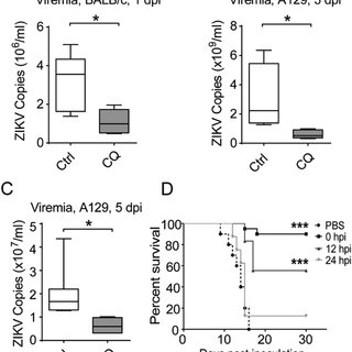 (PDF) Chloroquine, a FDA-approved Drug, Prevents ZIKV