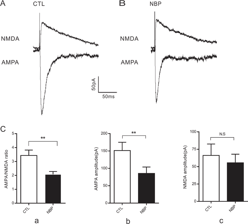 Decreased AMPA/NMDA ratio in CA1 pyramidal neurons. (A, B