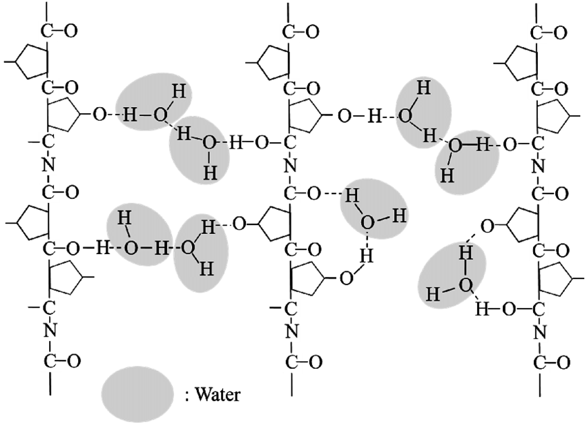 Schematic structure for collagen peptide chain with the