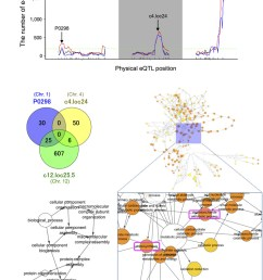 expression quantitative trait loci hotspot size significance profile and functional assessment of genes with trans [ 850 x 1095 Pixel ]