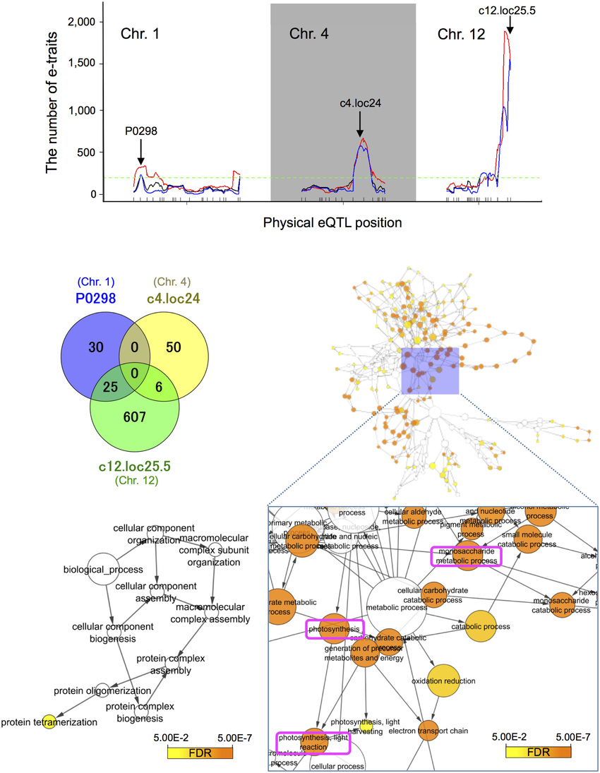 medium resolution of expression quantitative trait loci hotspot size significance profile and functional assessment of genes with trans