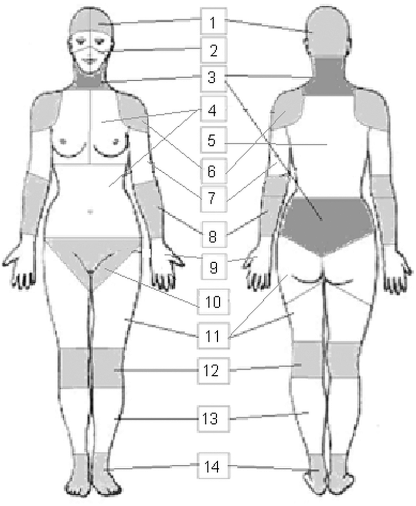 medium resolution of illustration of the 51 regions and 14 body parts on the female body chart 1