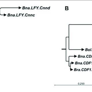 (PDF) Flowering Time Gene Variation in Brassica Species