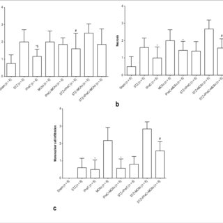 A. Western blot analysis of Caspase 3 protein in cardiac