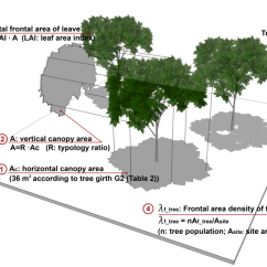 Forest Canopy Diagram Cat5e Jack Wiring Tree Great Installation Of Calculation Schematic Effective Frontal Area Density Rh Researchgate Net Bonzi