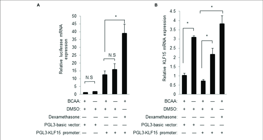 BCAA does not directly affect KLF15 promoter activity